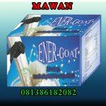 Distributor Susu Kambing Etawa  Energoat